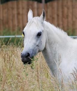 Pferdehaltung - Futter